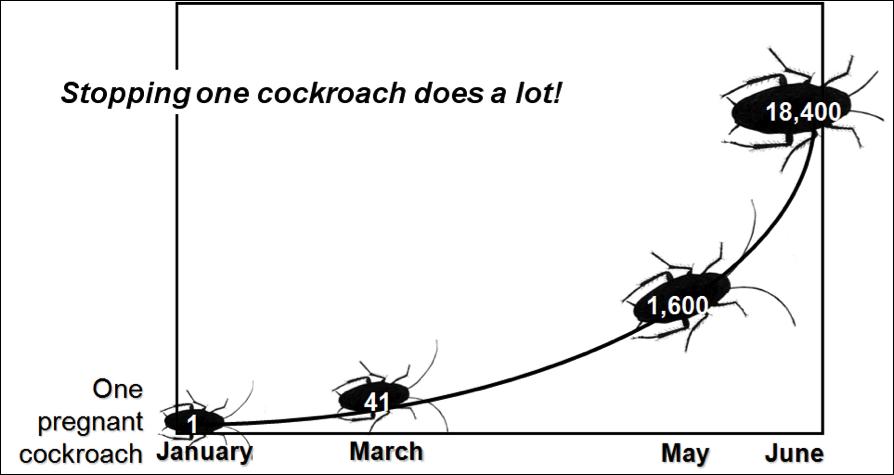 Roach infestation growth chart