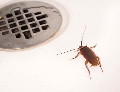 Roaches in the shower