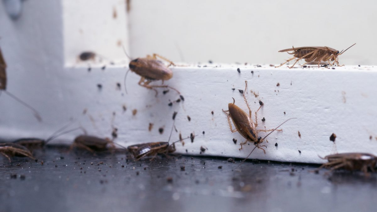 Roaches The Headache Of Every Florida Homeowner Halo Home Watch
