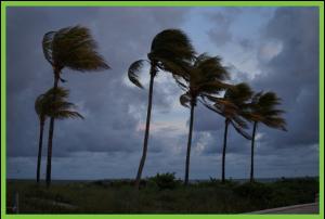 Storm Services